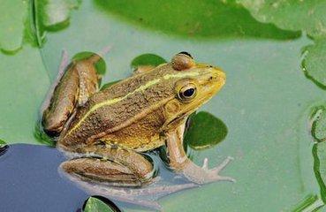 待到春天气温回升,青蛙就会从泥土里爬出来.